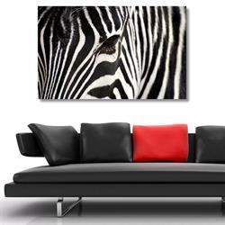 Tictac Zebra Kanvas Tablo - 50x75 cm